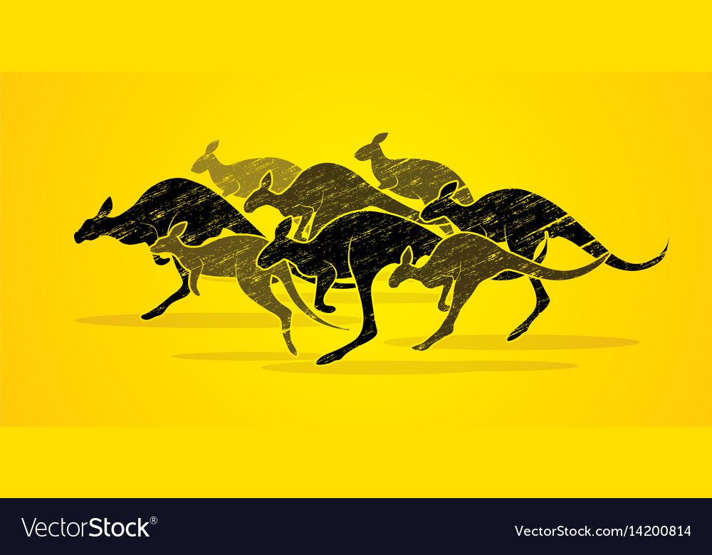 Group of kangaroo jumping graphic vector image