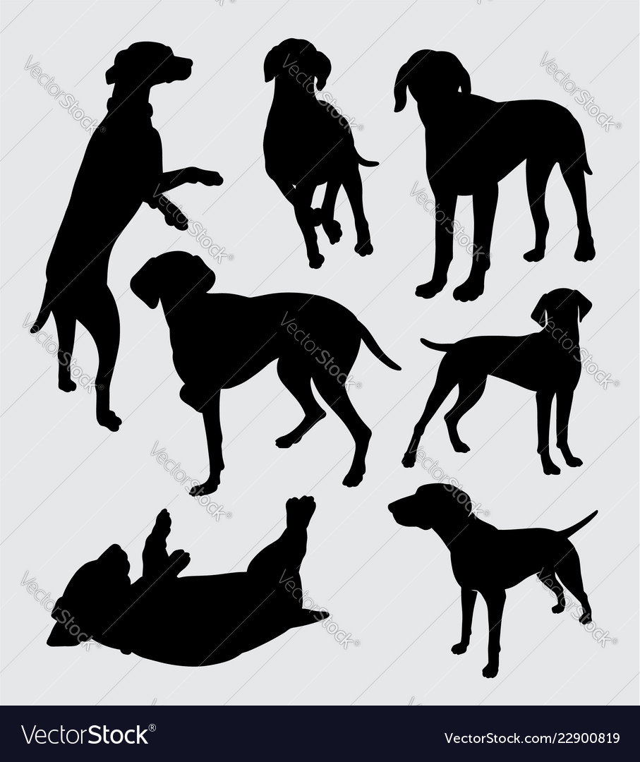 Vizsla dog pet animal silhouette