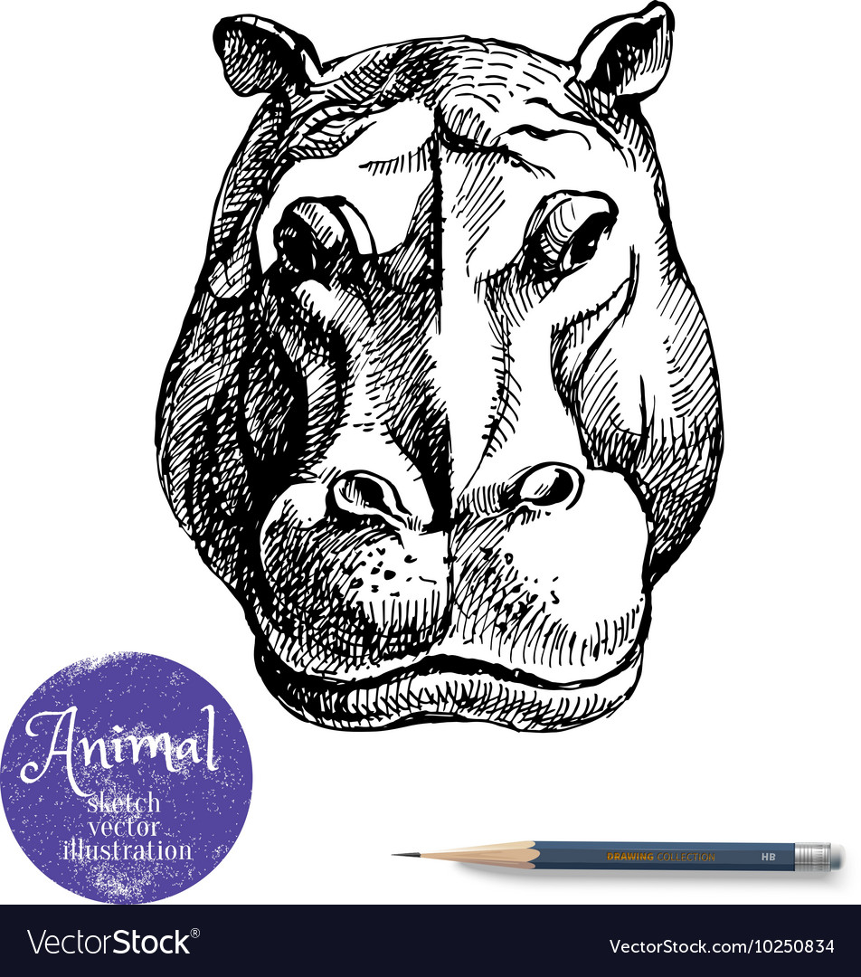Hand drawn hippo animal Sketch isolated vector image