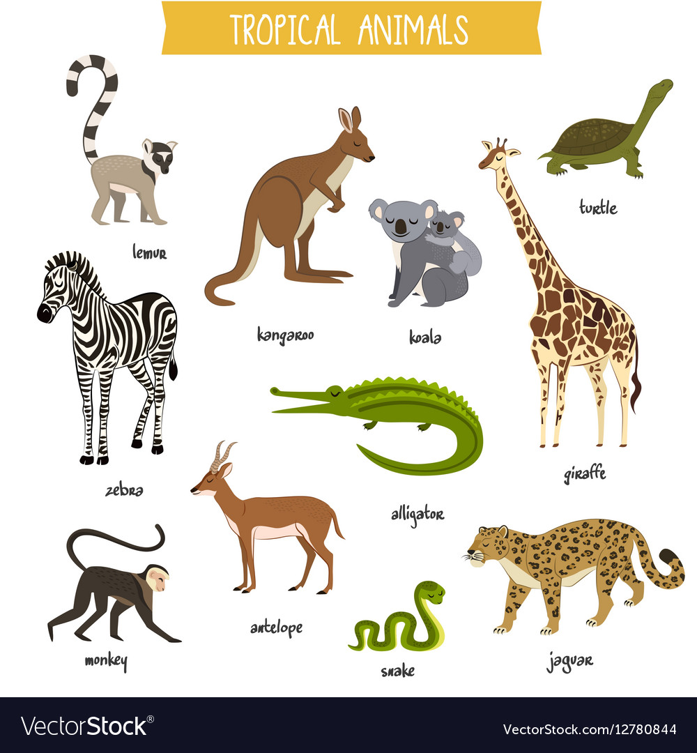 Tropical animals set isolated