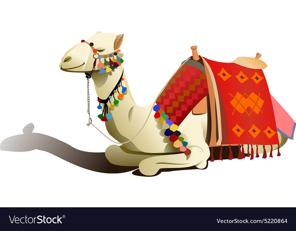 Saddled camel resting vector image