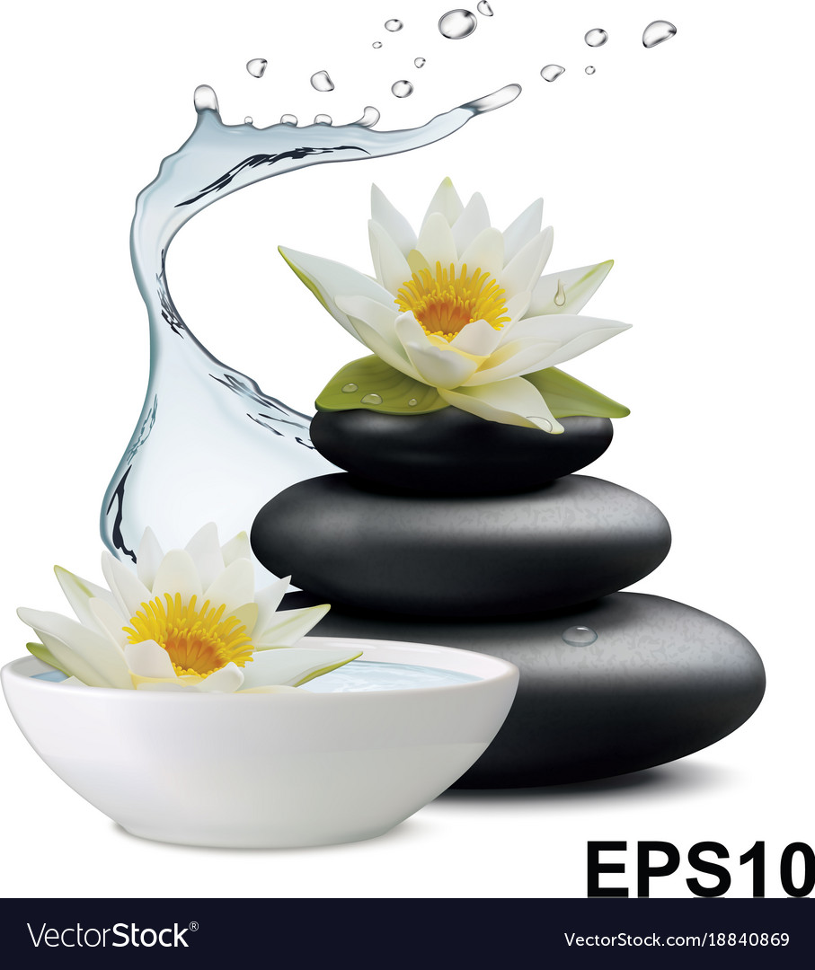 Water Lily Flowers And Zen Stone Bowl With Water Vector Image