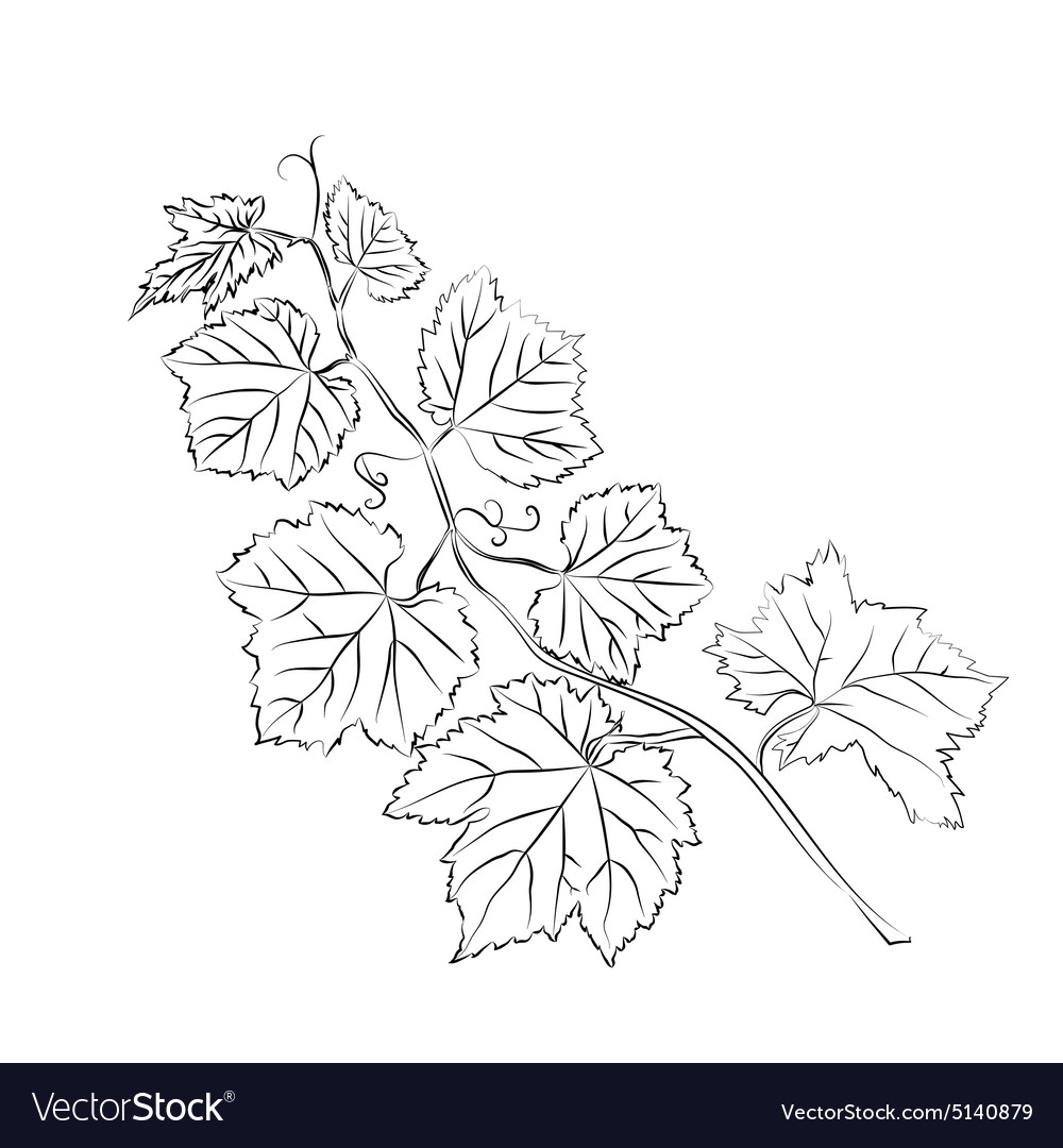 Grape Leaves Baroque Plants Royalty Free Vector Image
