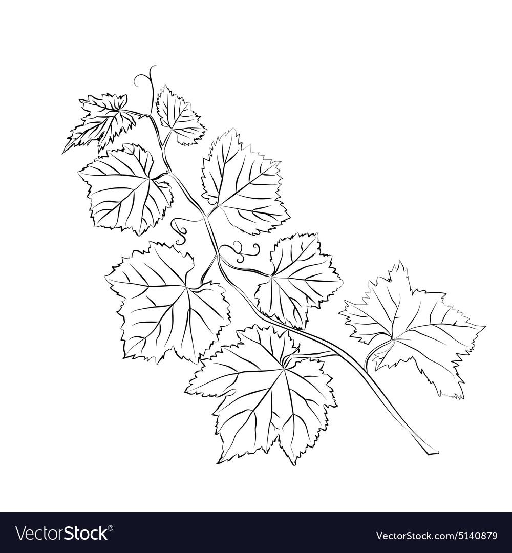 Grape Leaves Baroque Plants Royalty Free Vector Image