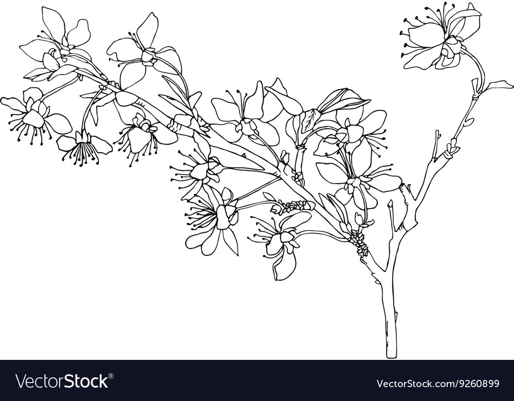 It is a picture of Nifty Flower Blooming Drawing