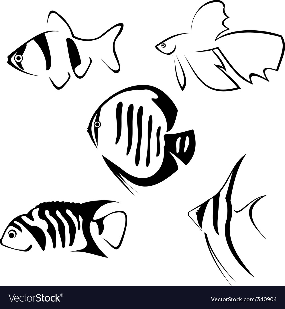 Fish line drawing vector image