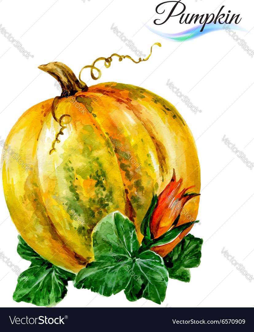 Watercolor pumpkin vector image