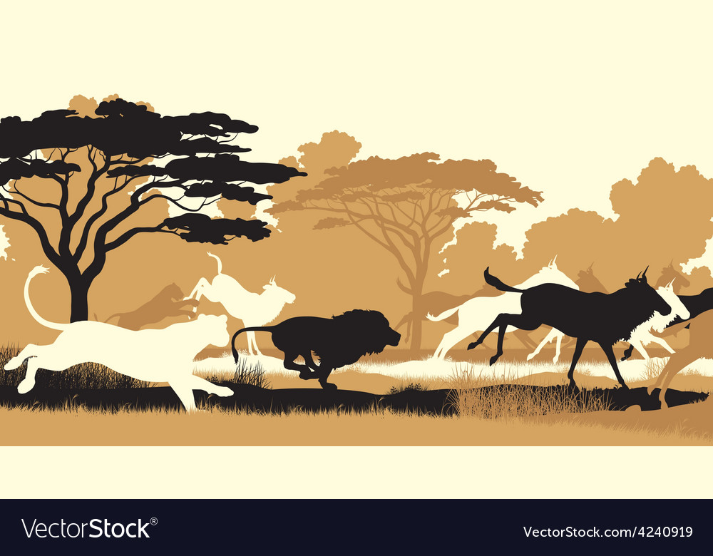 Lions hunting wildebeest