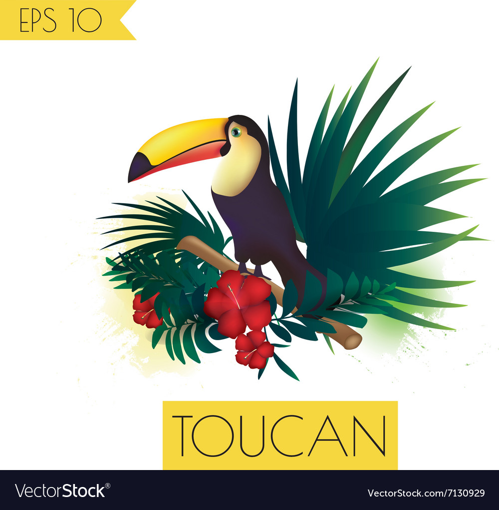 Toucan and tropical plants