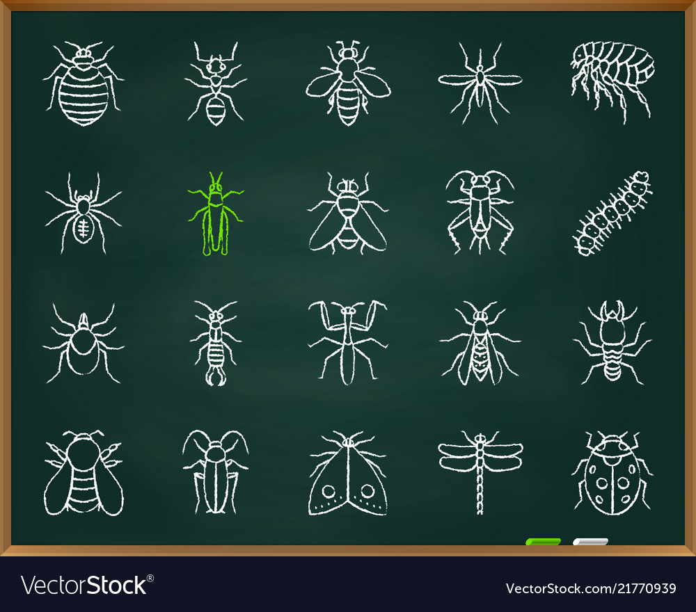 Danger insect chalk draw line icons set