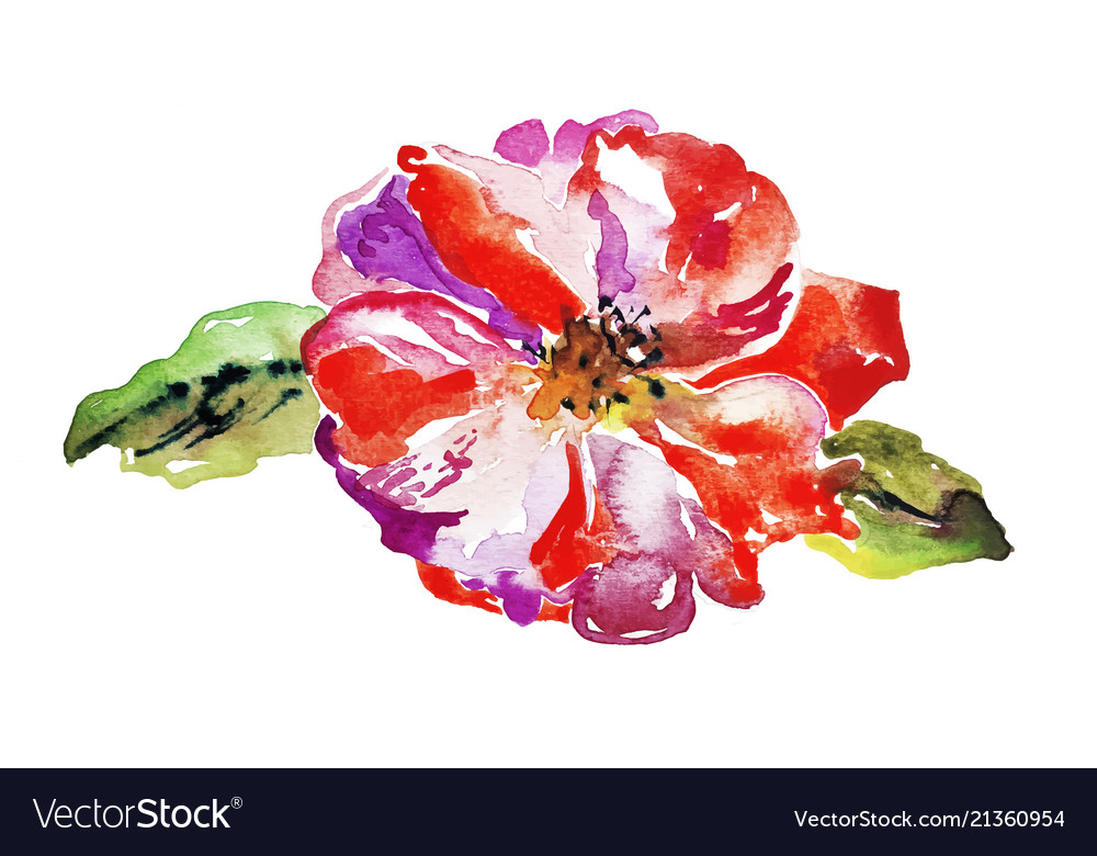 Bright poppy flower isolated on white background