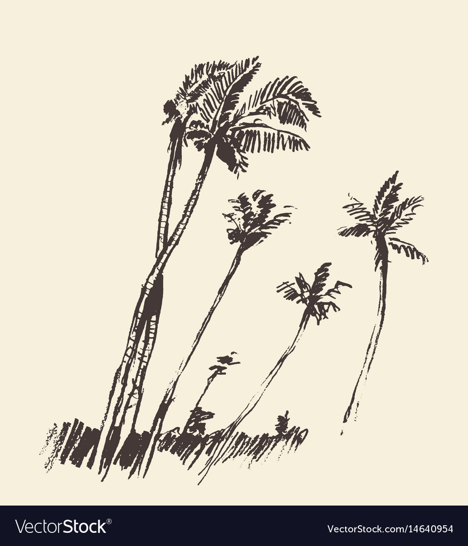 Silhouette of palm trees drawn sketch vector image