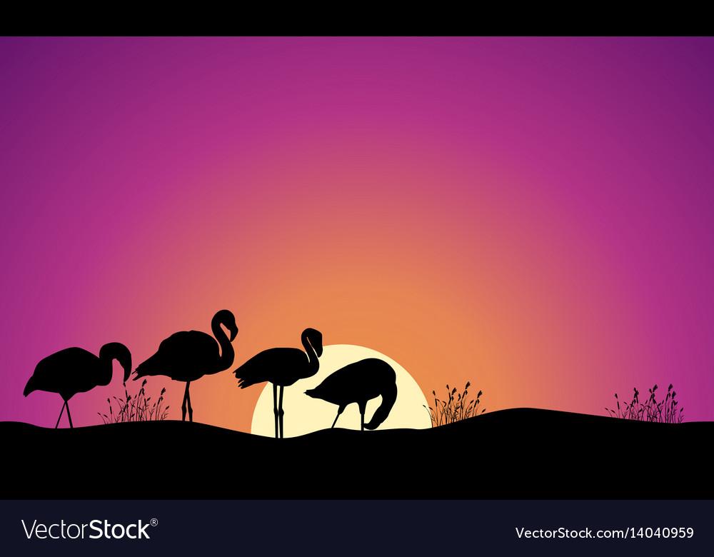 Collection stock of flamingo scene silhouettes