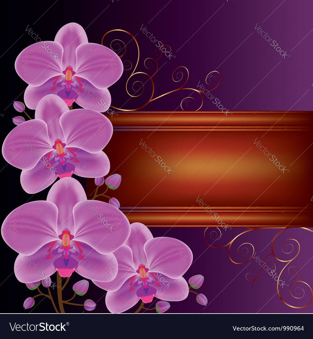 Background with exotic flower orchids