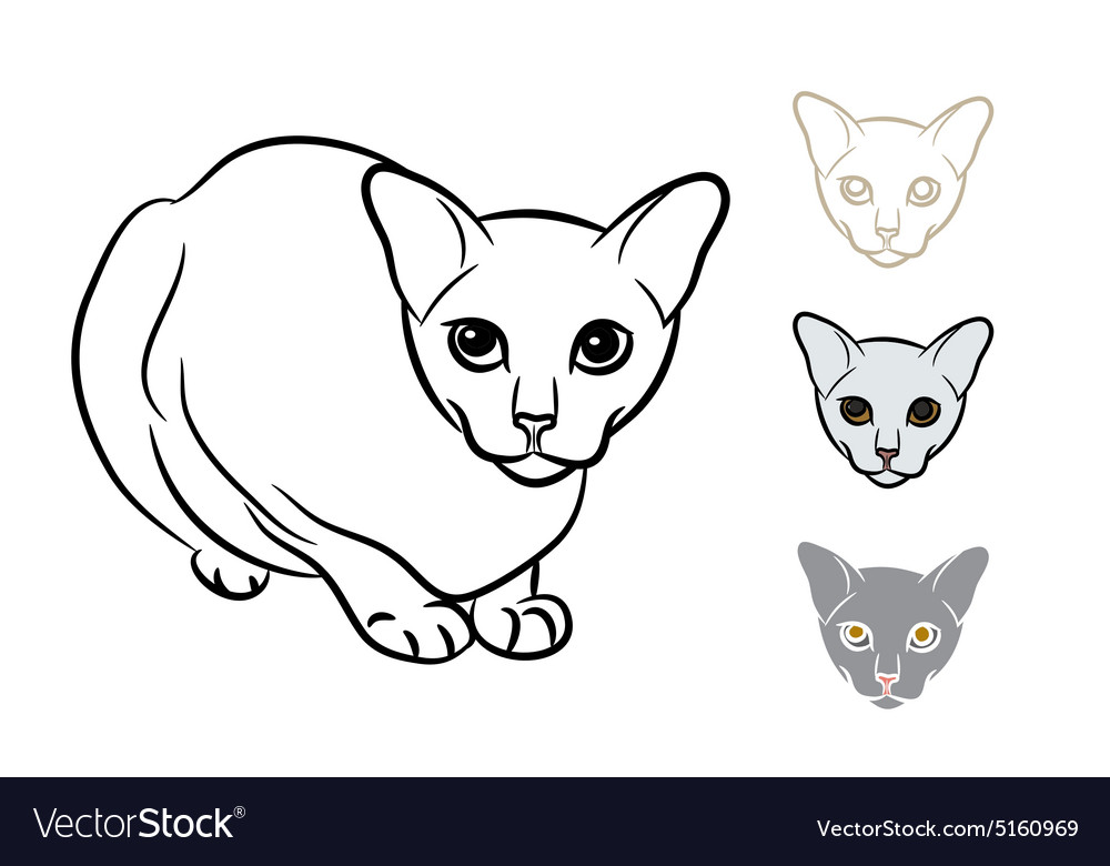 Drawing of adorable cat with three styles small
