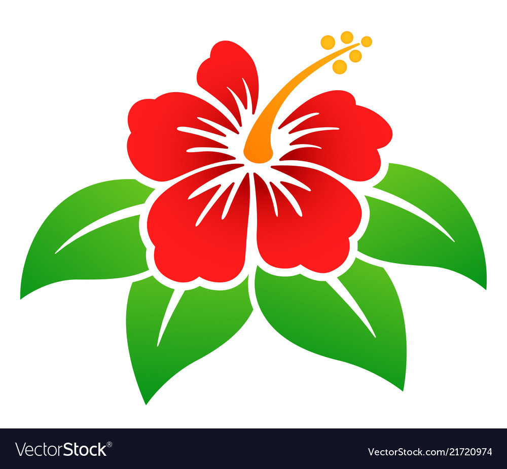 Hibiscus Flower Colorful Design Royalty Free Vector Image