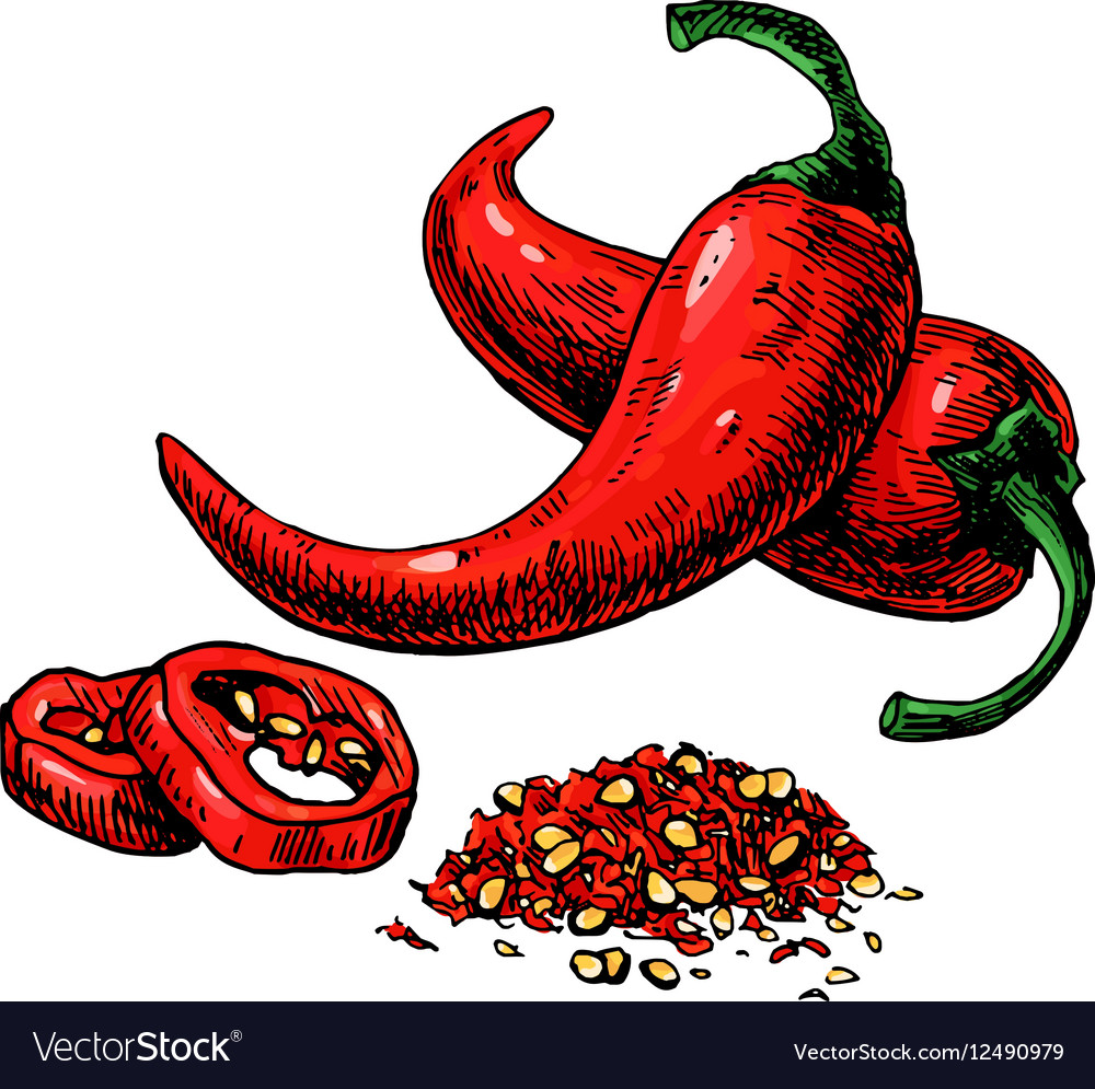 Chili Pepper hand drawn