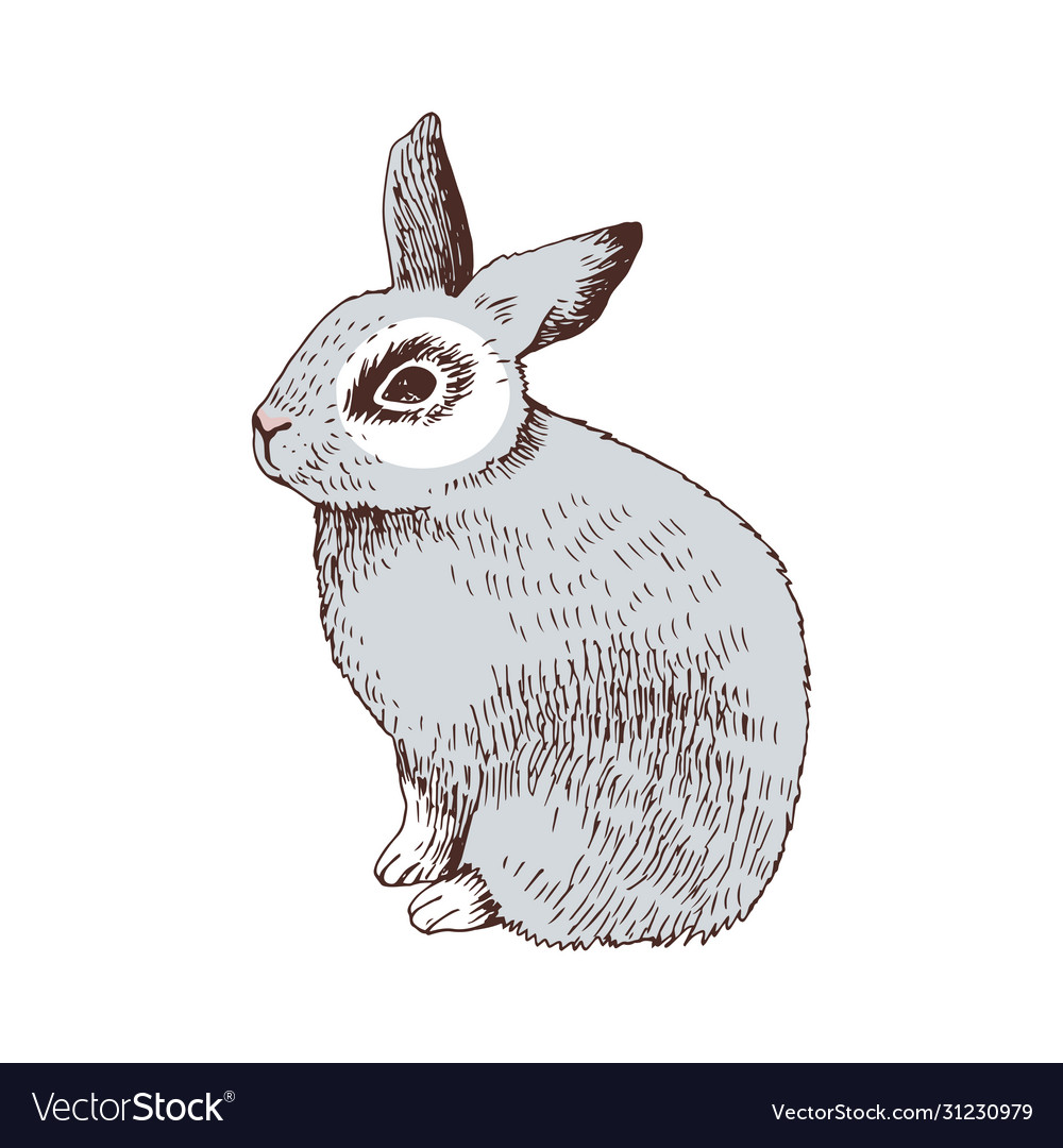 Hand drawn bunny vector