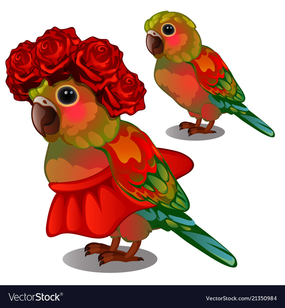 Colorful parrot in a red skirt and a wreath of