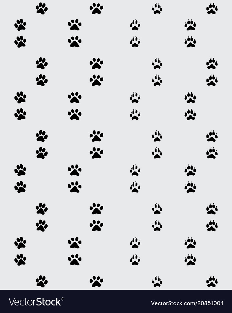 Footprint of paws