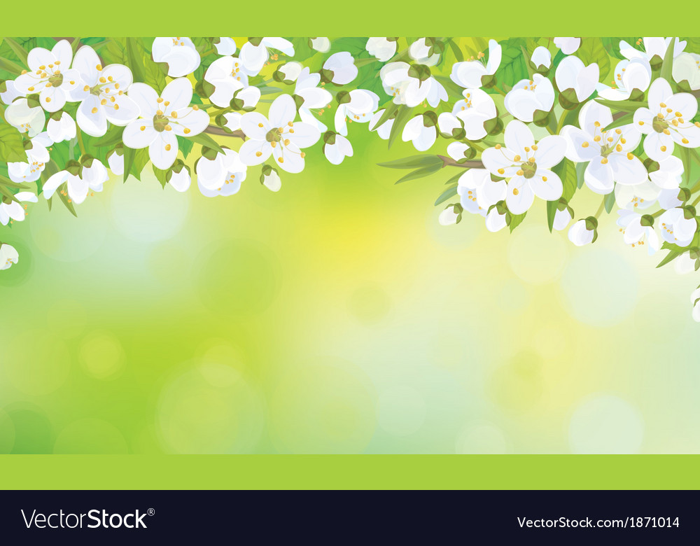 Floral white background vector image