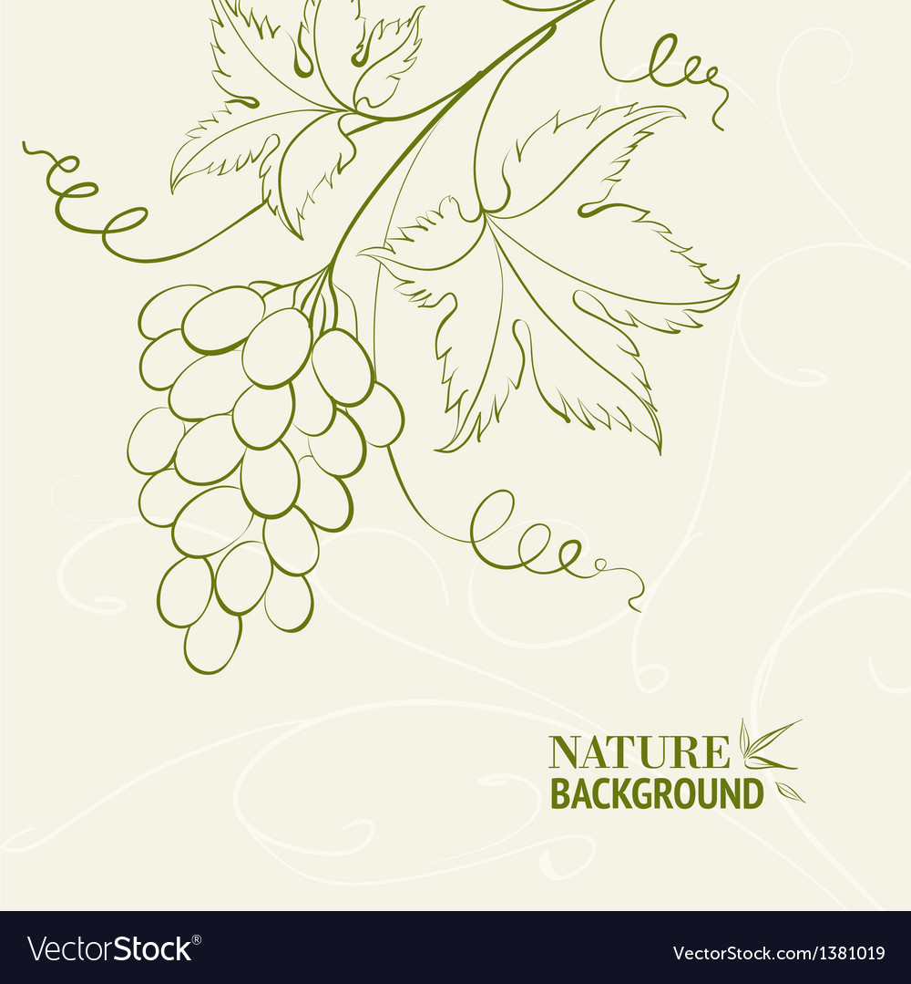 Grape wine card