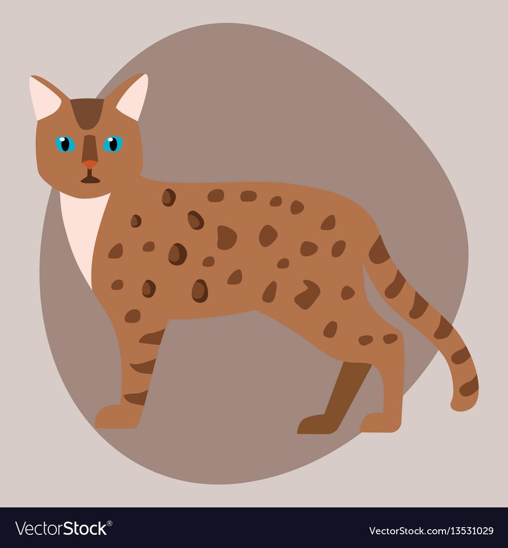 Cat breed bengal leopard cute pet brown fluffy