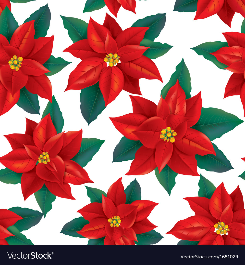 Seamless pattern of red Poinsettia