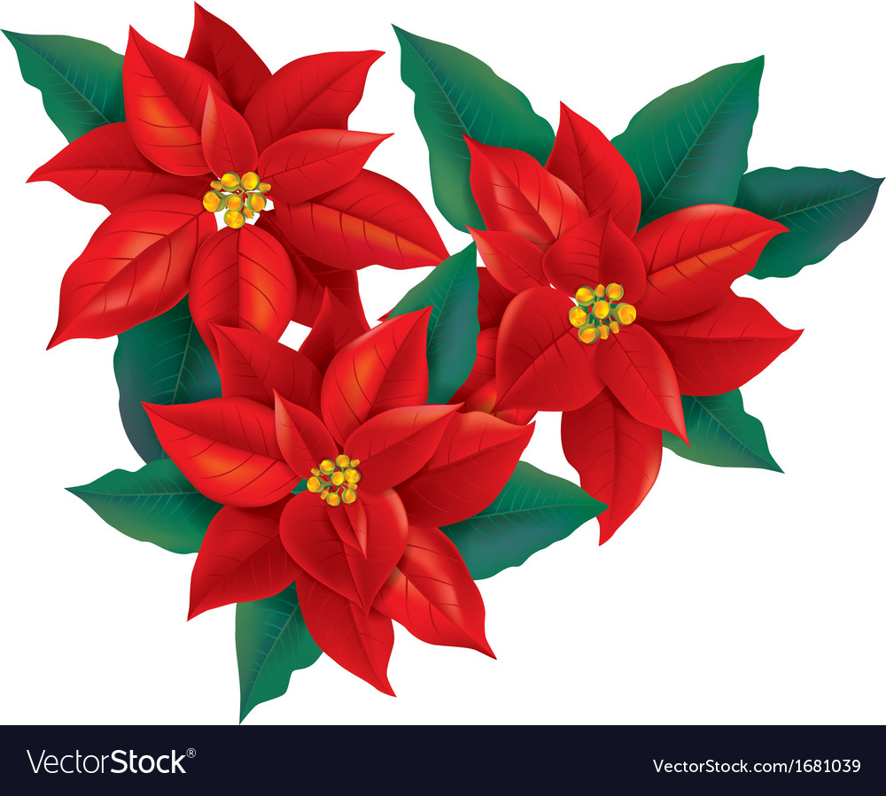 red poinsettia christmas flower vector image - Red Christmas Flowers