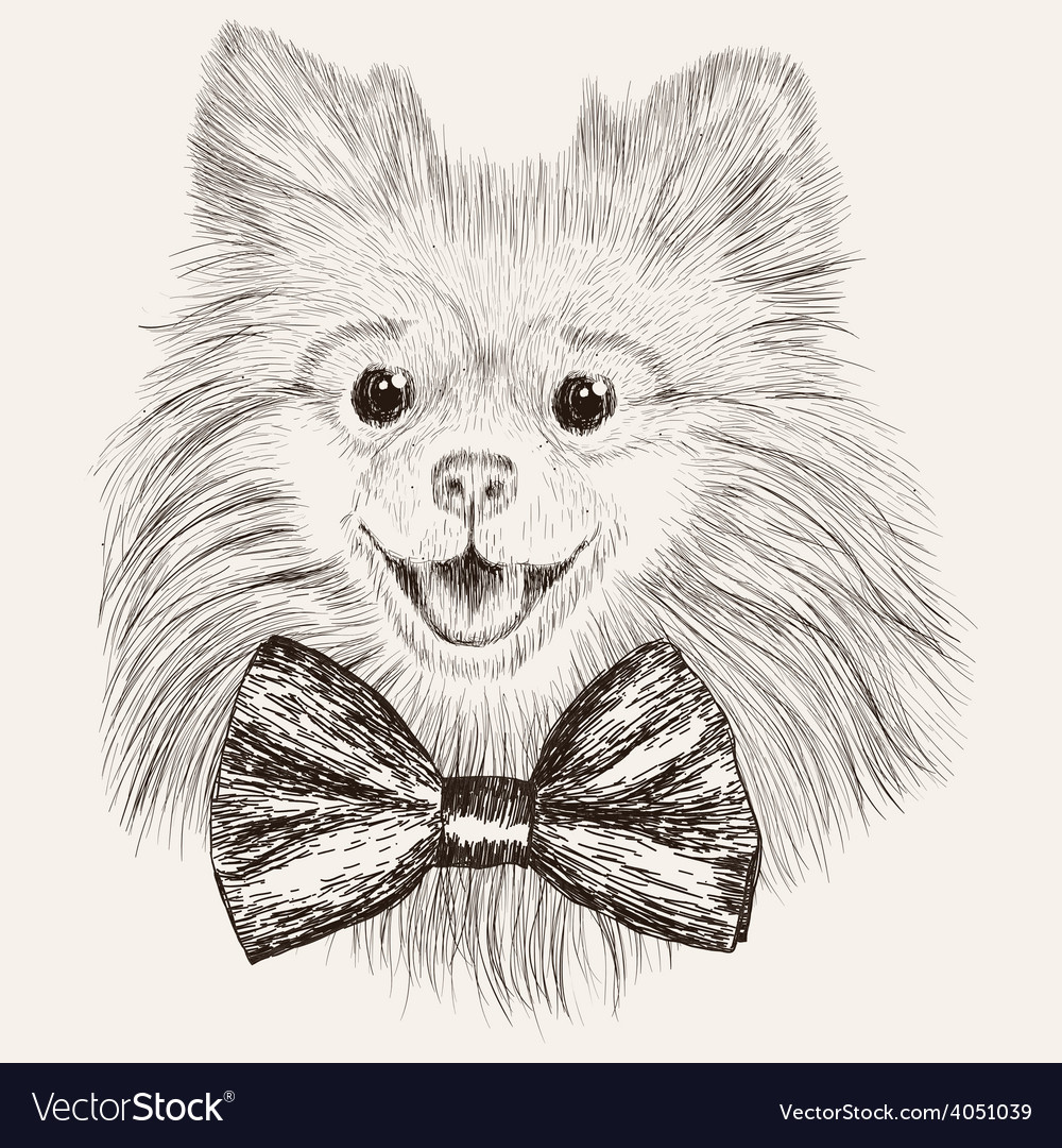 Sketch Spitz with bow tie Hand drawn dog