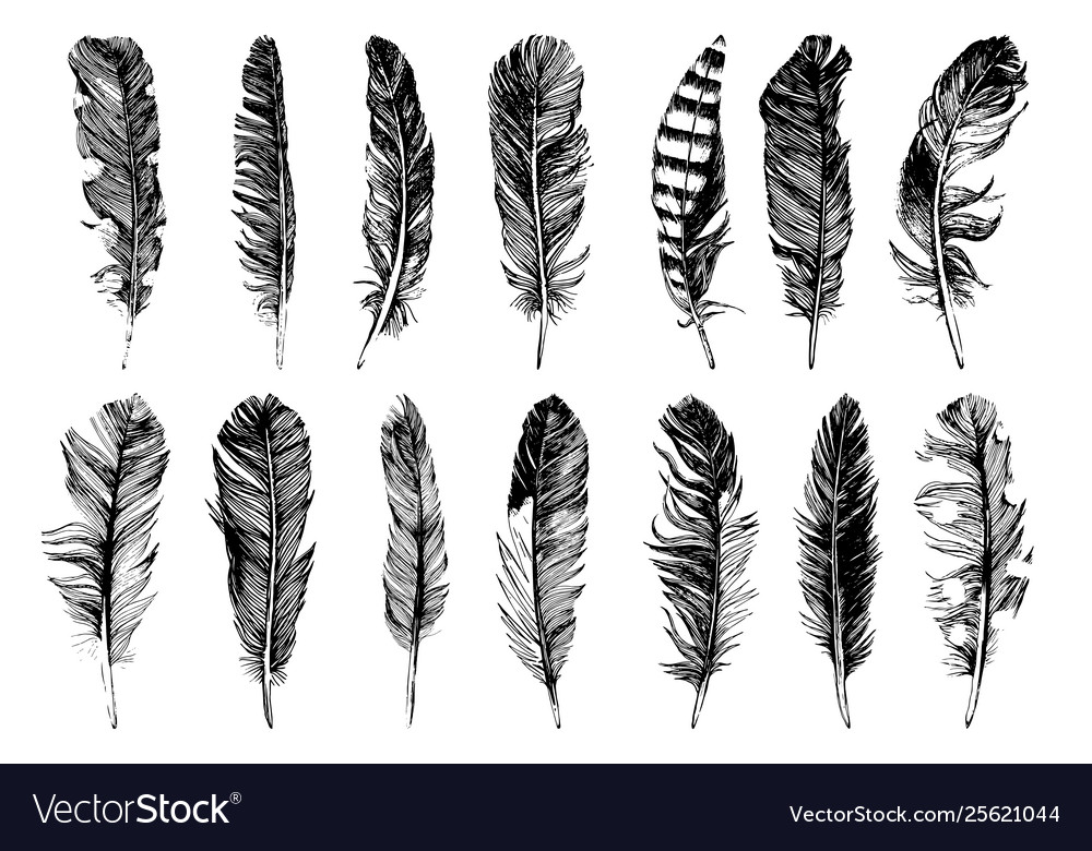 14 hand drawn feathers isolated on white