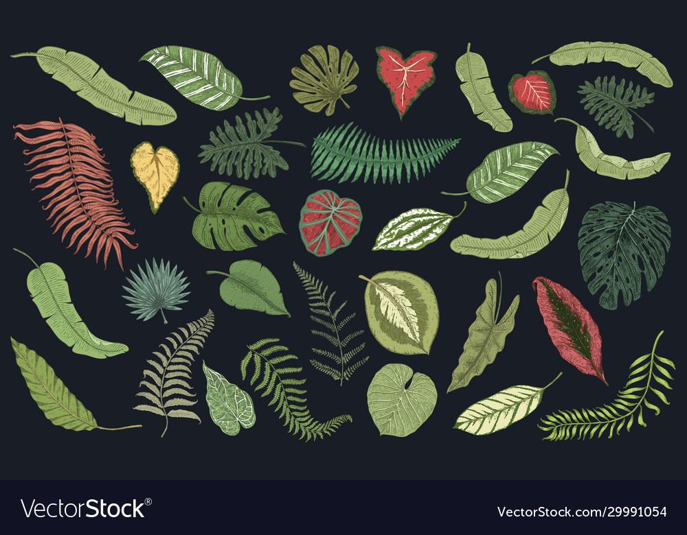 Tropical leaves set jungle plants in vintage