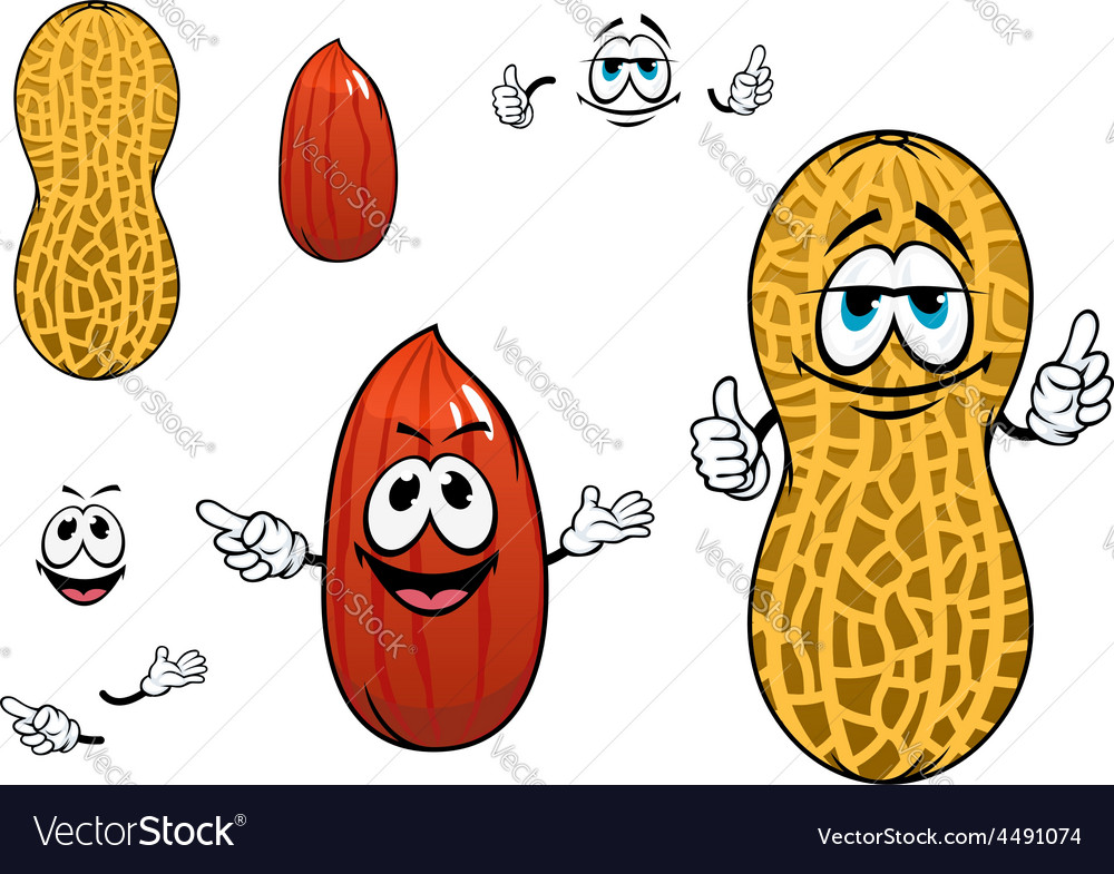 Funny kernel and pod of peanut characters vector image