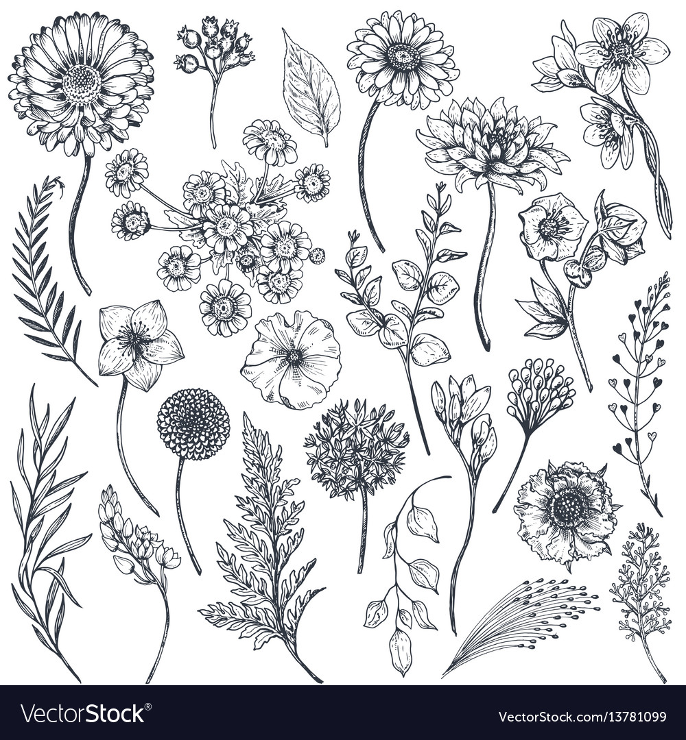 Collection of hand drawn flowers and plants