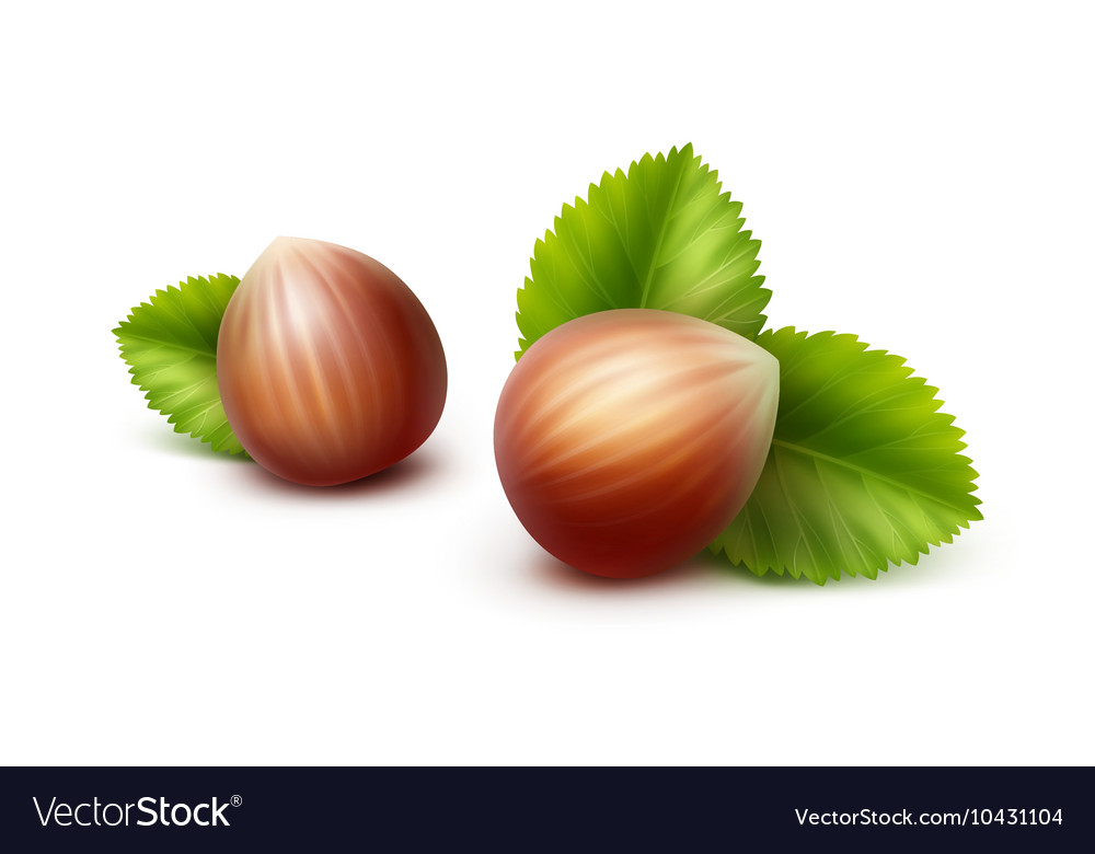 Full Unpeeled Hazelnuts with Leaves
