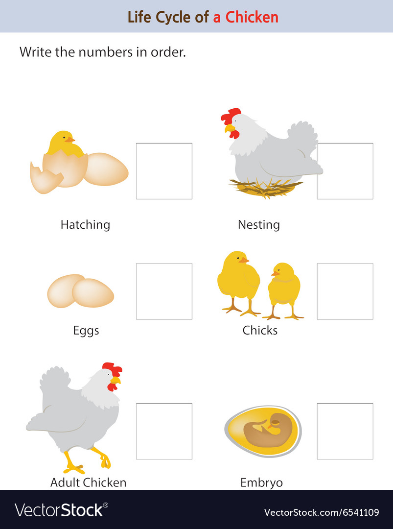 Chicken workbook