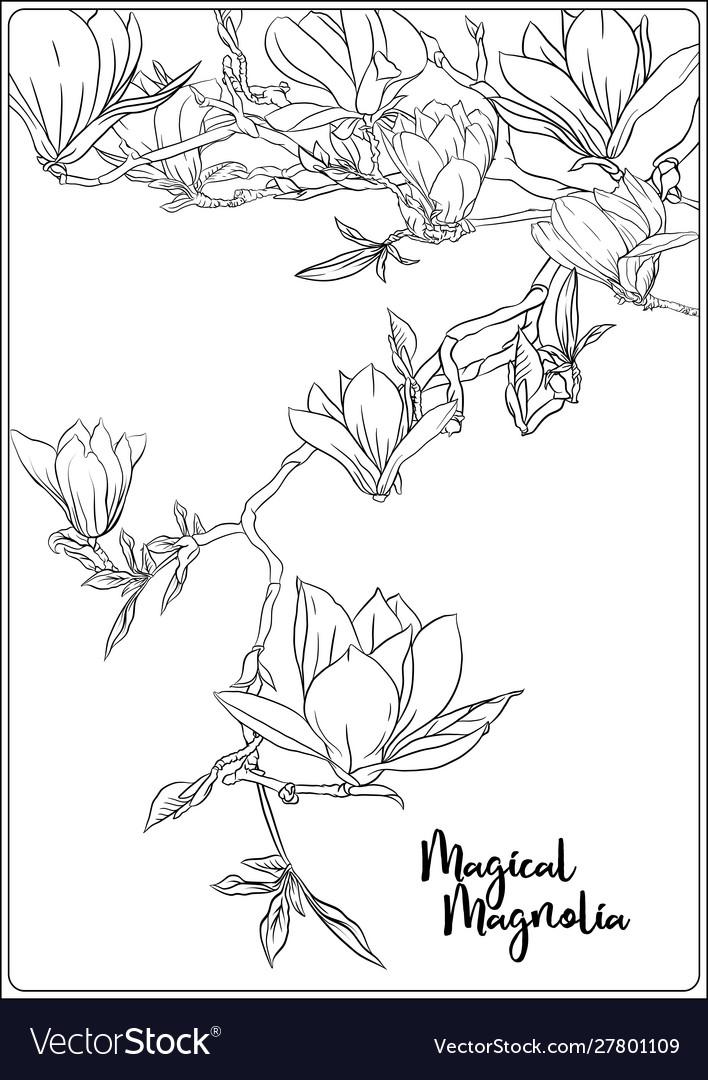 Magnolia tree branch — Stock Vector © ElenaBesedina #316518532 | 1080x708