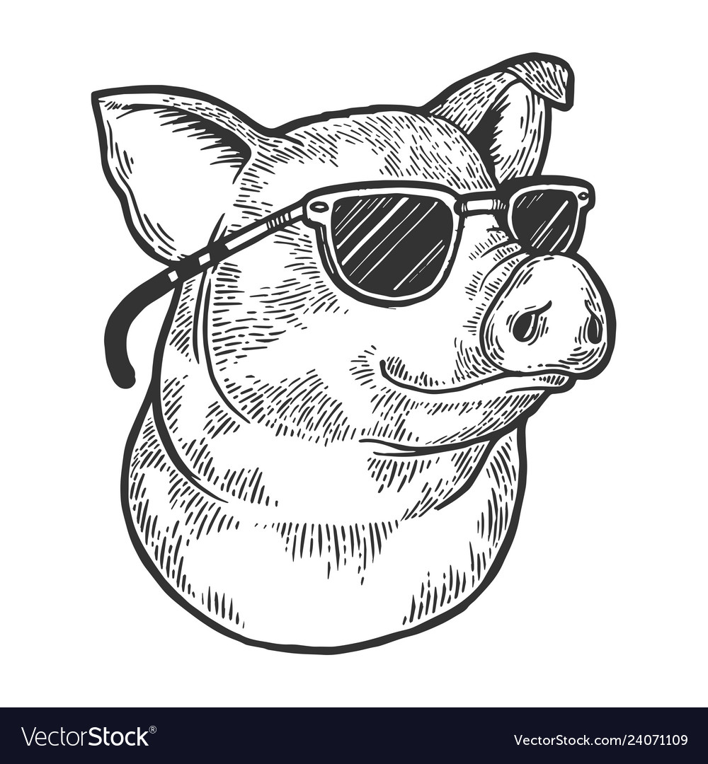 Pig animal in sunglasses sketch engraving