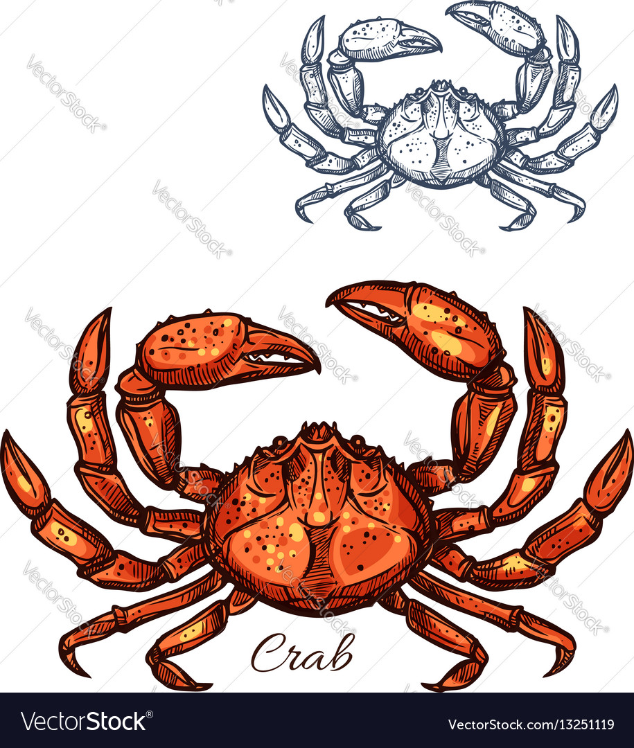 Crab isolated sketch icon