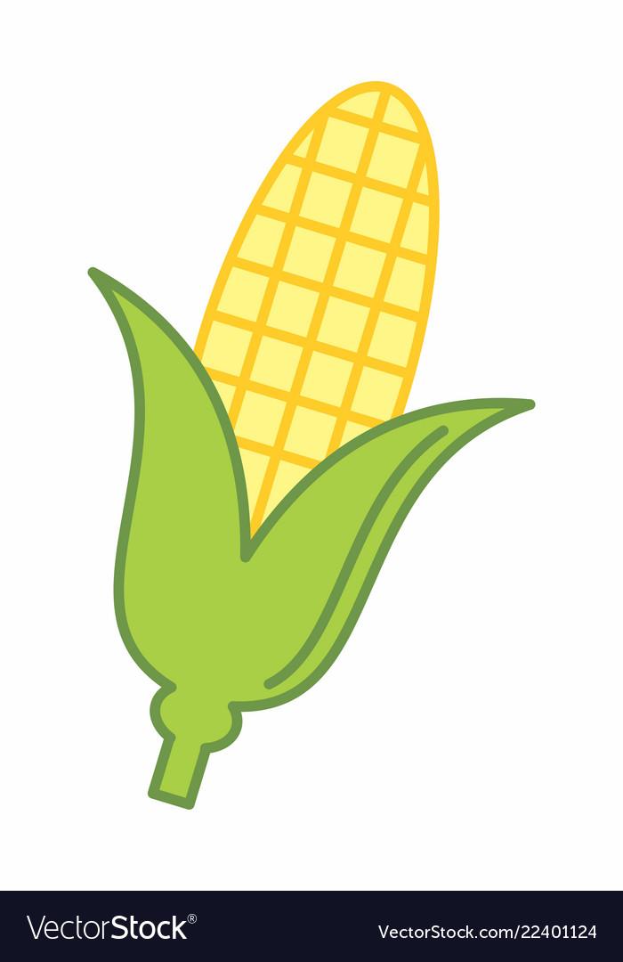 Corn cob colorful