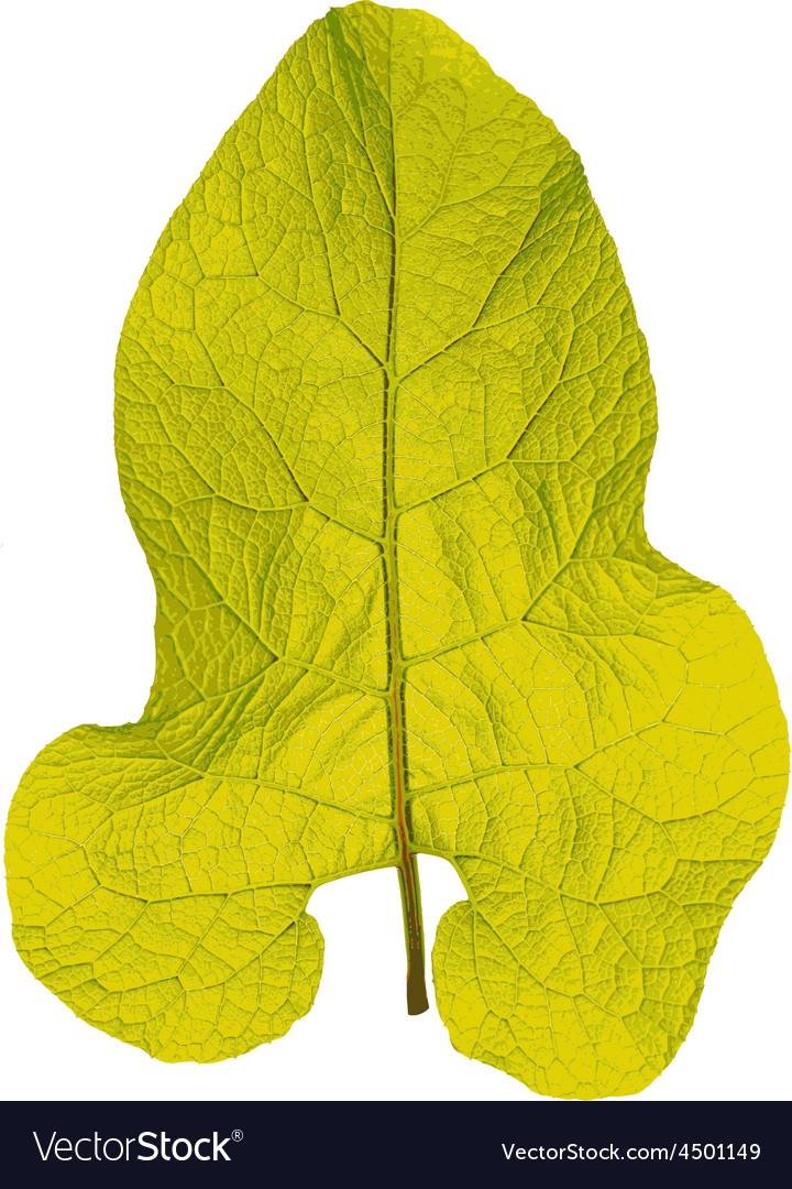 Autumn leaf on white background vector image