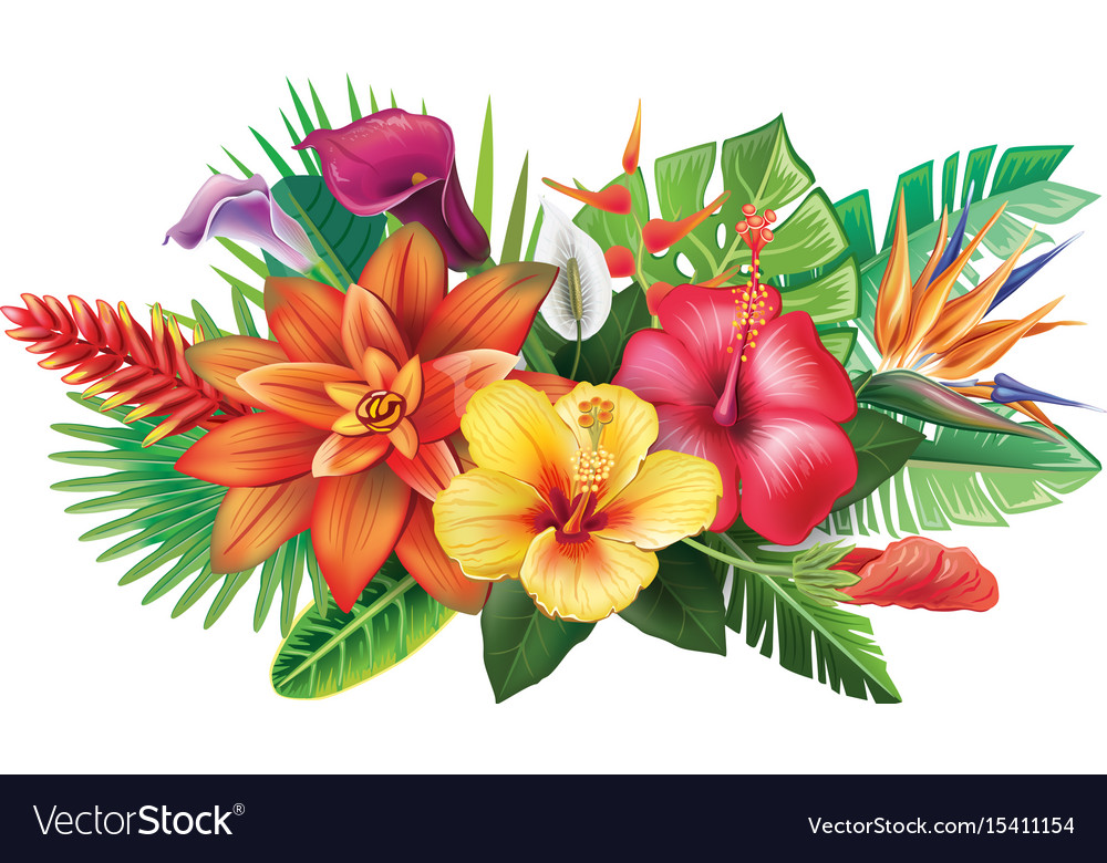Arrangement From Tropical Flowers Royalty Free Vector Image