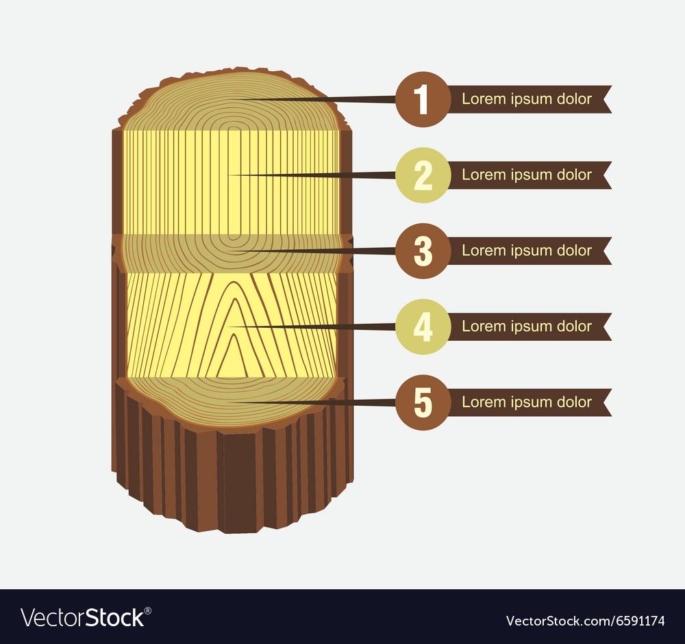 Tree Log Sawing Scheme vector image
