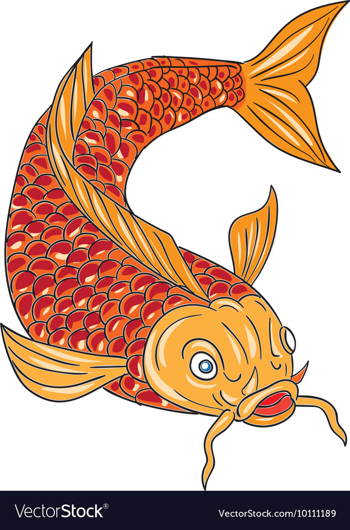 Koi Nishikigoi Carp Fish Swimming Down Drawing vector image