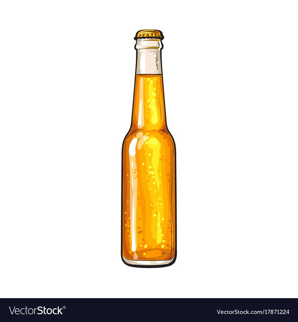 Bottle of cold beer sketch vector image