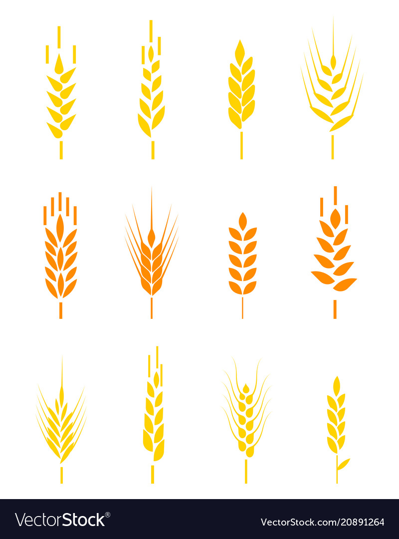Cereals icon set with rice wheat corn oats rye