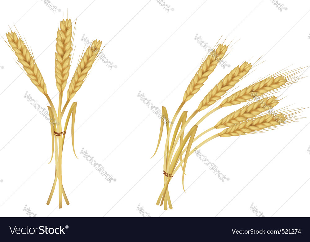 Two group wiith ears of wheat
