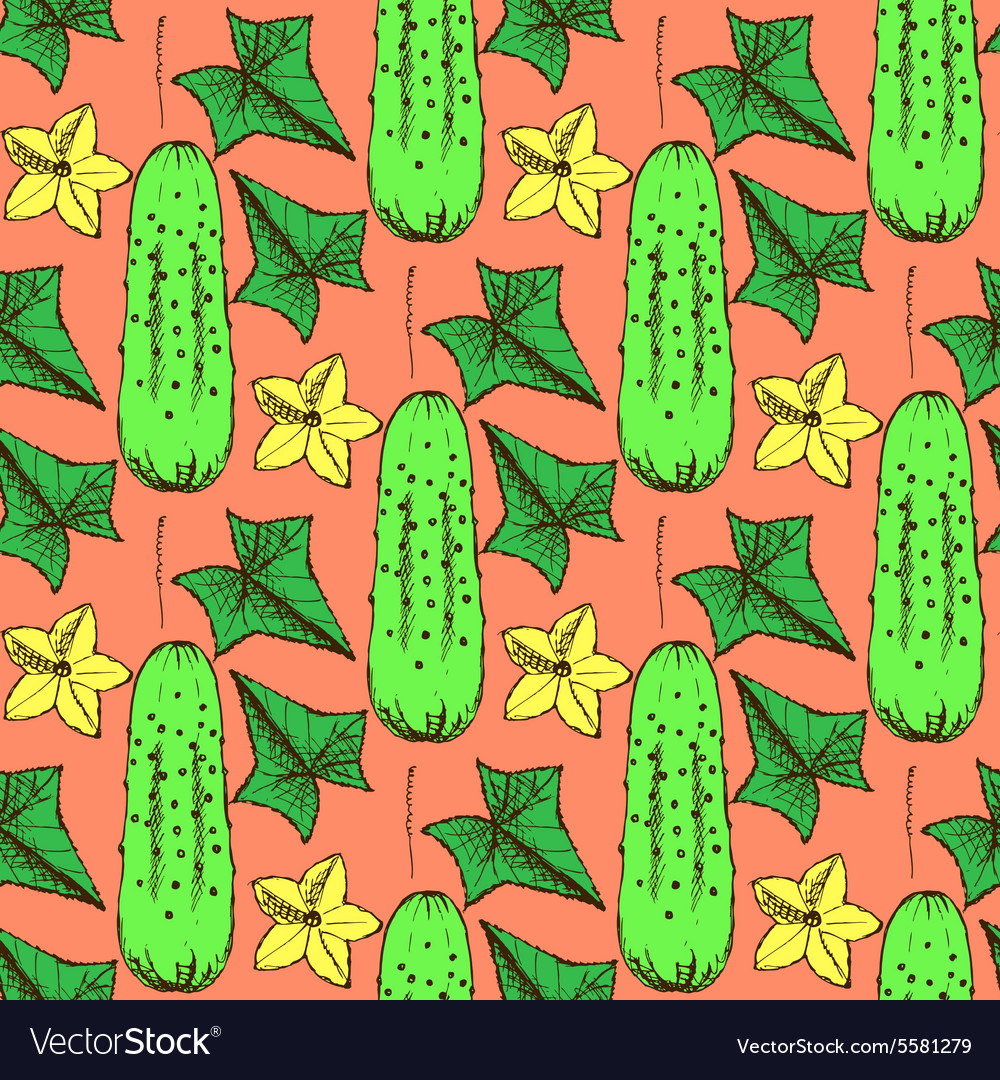 Sketch cucumbers in vintage style vector image