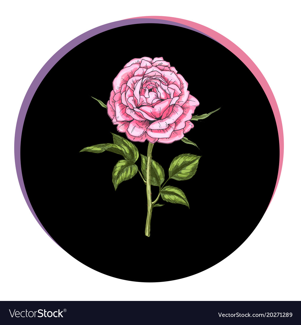Beautiful rose flower in a black circle floral vector image izmirmasajfo