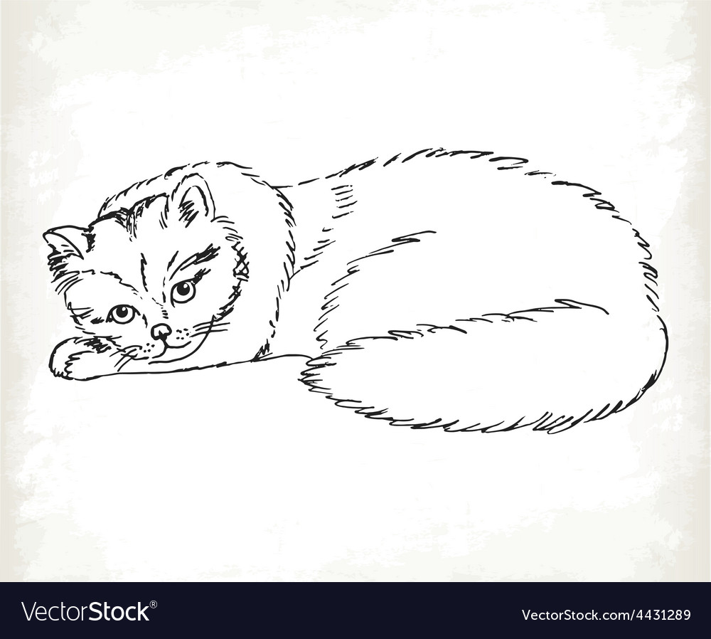 Fluffy cat in sketch style on a white background